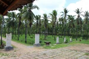Barisan pohon kelapa 2
