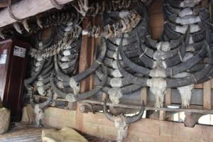 Rahang babi dan tanduk kerbau
